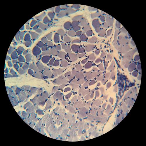Blog Biología Molecular